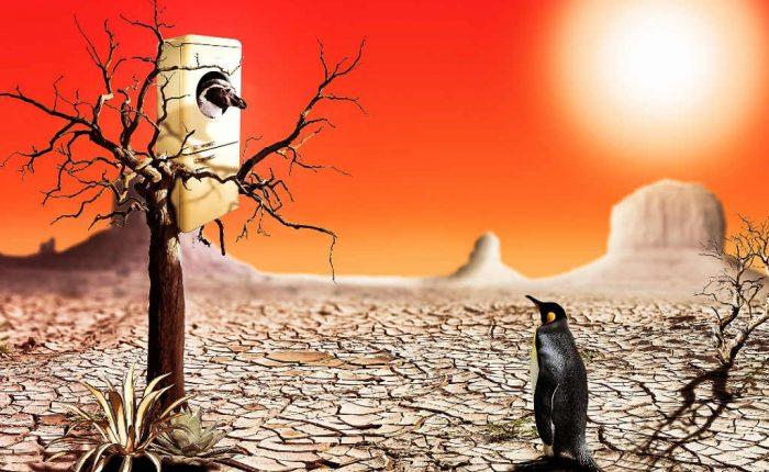 Pinguin in der Wüste - seine Talente sind dort am falschen Ort