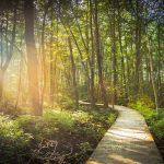 befestigter in Wald mit einfallendem Sonnenlicht