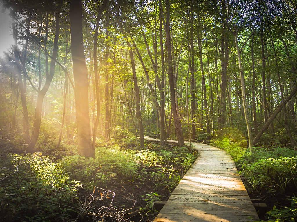 Weg durch Wald symbolisiert Aufbruchstimmung