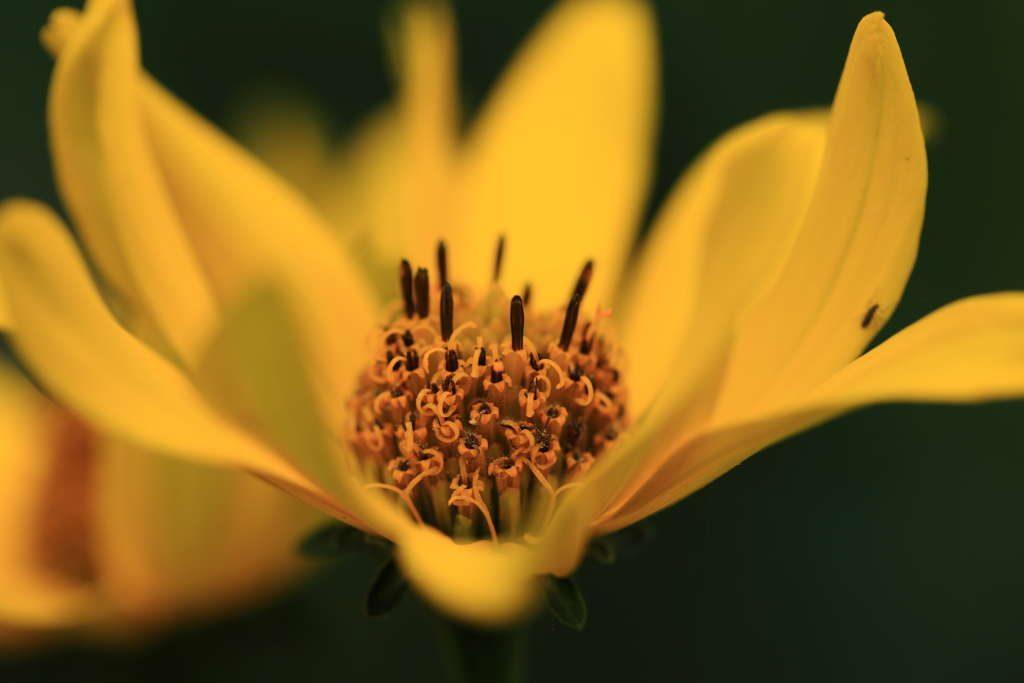 Blüte in Nahaufnahme